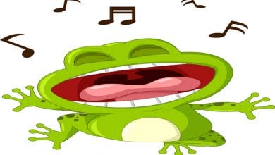 Screaming Frog SEO Denetleme
